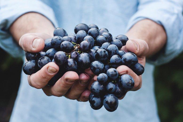 Agricoltura: se potessi rinascere, farei la stessa scelta
