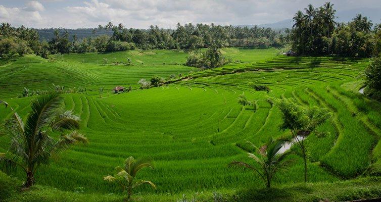 Alcuni interrogativi sulla produzione agricola nel prossimo futuro