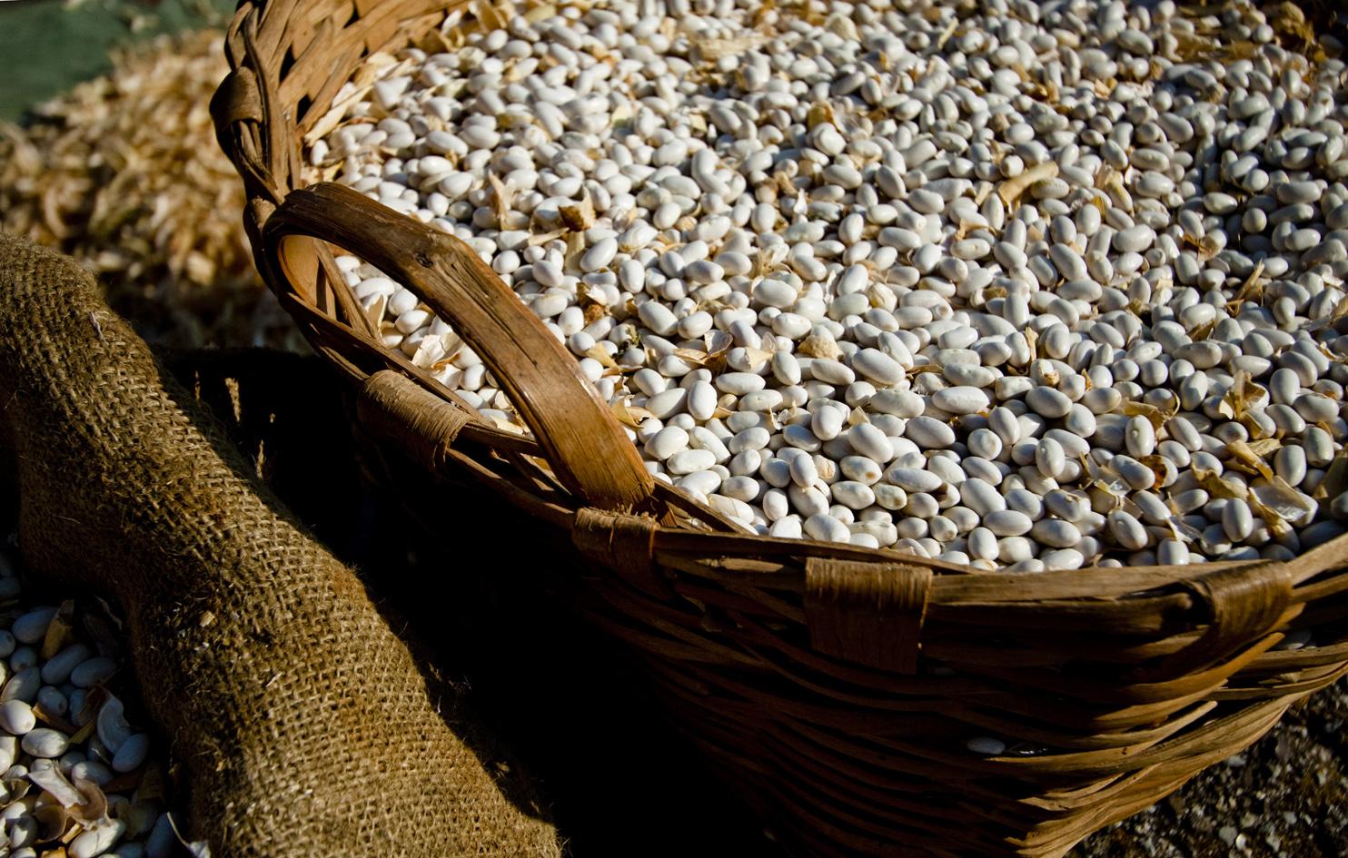 La valorizzazione della fagiolana di Torza: tutela di sementi antiche e presidio del territorio dell'Alta Val di Vara
