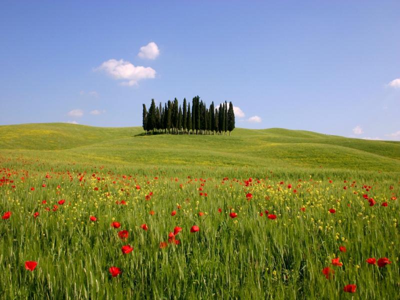 La sanità della Regione Toscana contro il glifosate