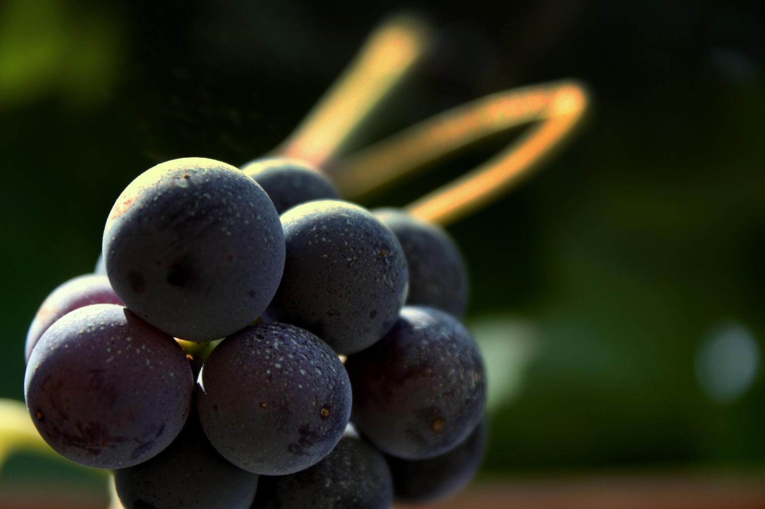 """Primo corso """"VIVA Sustainable Wine"""" – Iscrizioni entro il 24 luglio 2015"""