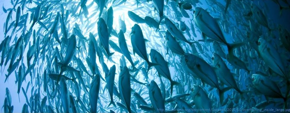 L'overfishing e le risorse ittiche del pianeta