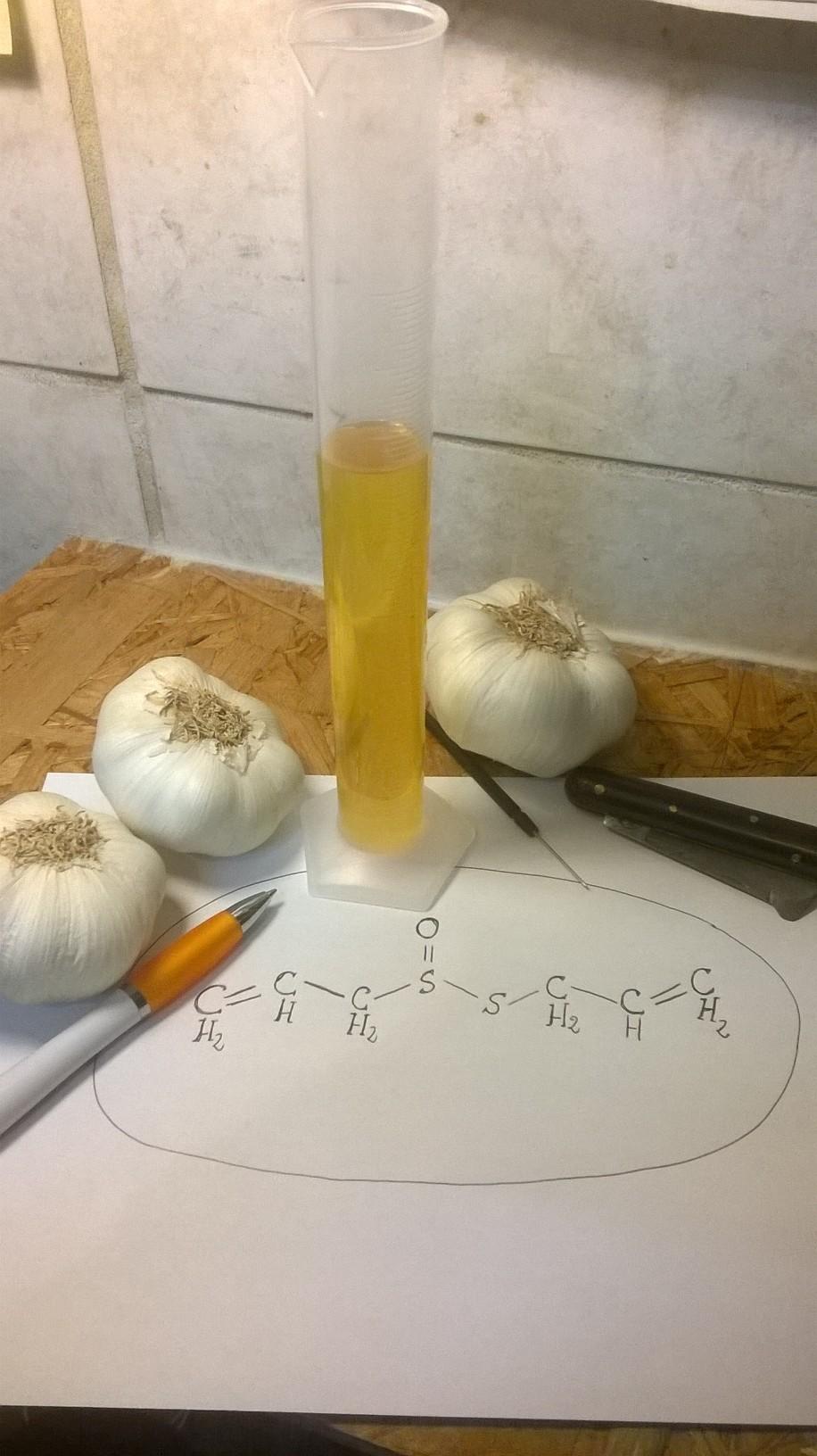 L'estratto di Allium sativum in soluzione glicolica