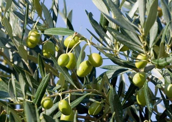 Italia-Albania: progetti di cooperazione in agricoltura