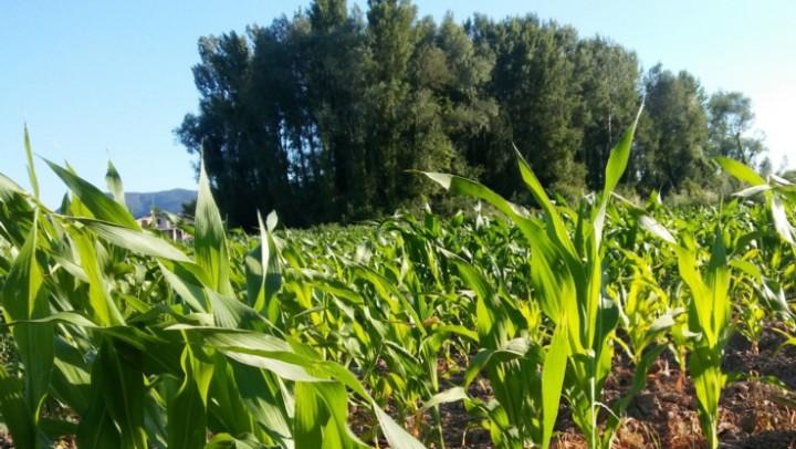 Un Progetto Integrato di Filiera per la gestione del rischio aflatossine