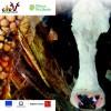 """Il progetto pilota """"Gira"""" per ridurre le aflatossine"""