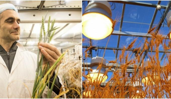 Un 2018 di innovazioni scientifiche per l'agricoltura