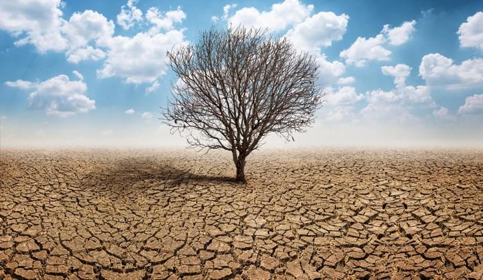 Surriscaldamento globale e agricoltura