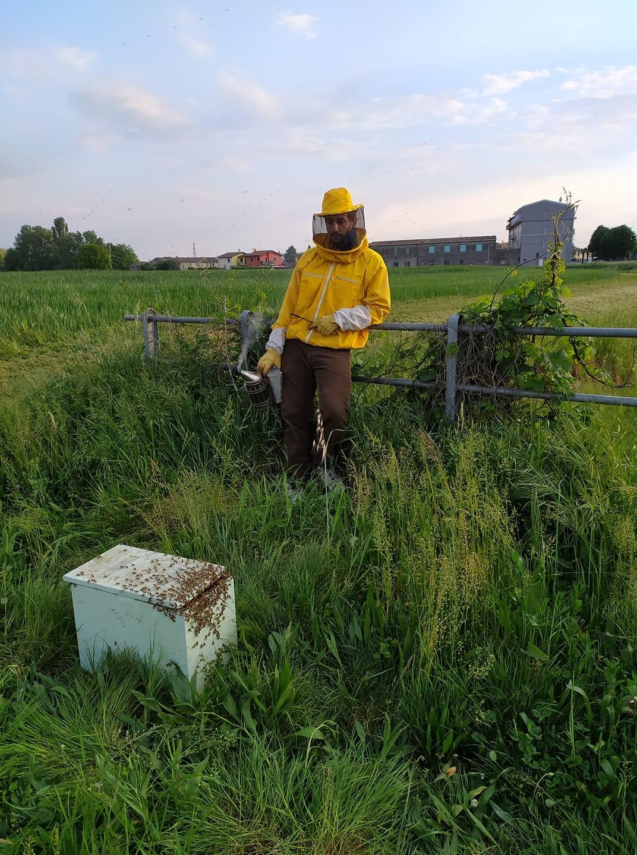 """Sciamatura: il ruolo delle """"streaker"""", le api apripista"""